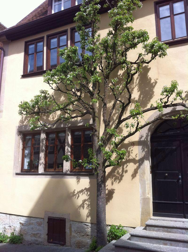 Vaddertach_Rothenburg-Tauber_2013-05-09 11.18.17
